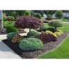 Macaluso Landscaping company