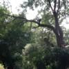 T's Tree Service